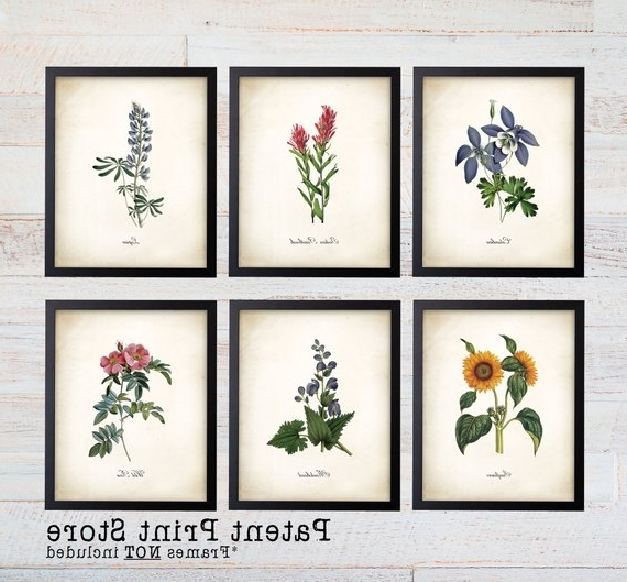 Colorado Wildflower Botanical Art Prints. Botanical Print (View 3 of 15)