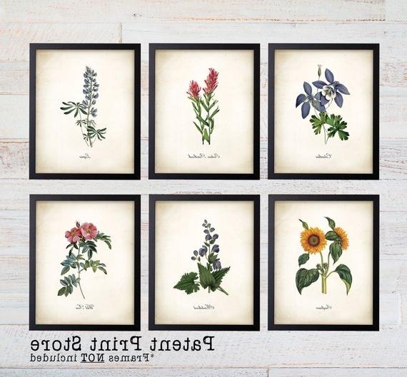 Colorado Wildflower Botanical Art Prints. Botanical Print (View 6 of 15)