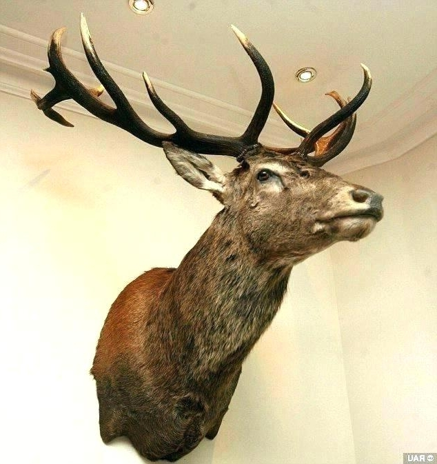 Current Stags Head Wall Art Pertaining To Stag Head Wall Decoration Stag Head Wall Art Deer Head Wall For (View 2 of 15)