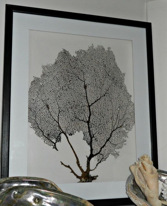 Current Wall Art Diy Framed Seafan Sea Fan Framed Sea Fan Shadowbox Art With Sea Fan Wall Art (View 3 of 15)