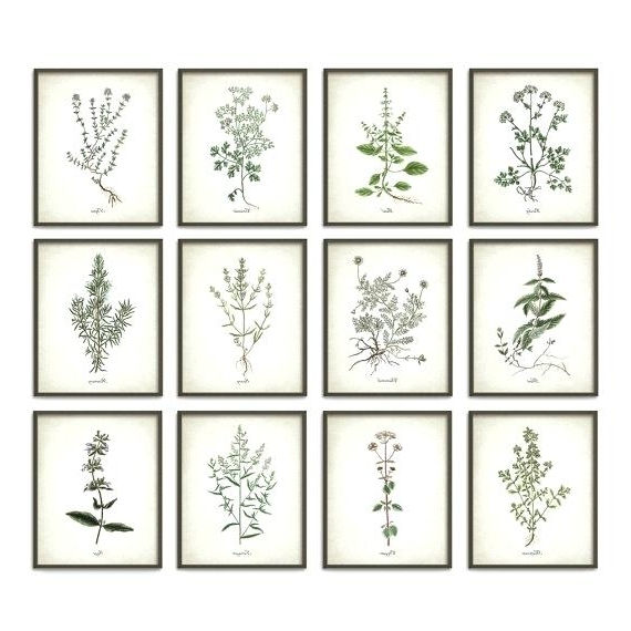 Current Wall Art Print Sets Inside Decoration: Kitchen Herbs Wall Art Print Set Of Vintage Botanical (View 1 of 15)