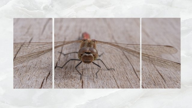 Dragonfly 3D Wall Art Throughout Favorite Triptych Wall Art Dragonfly 3D Model In Other 3Dexport (View 13 of 15)