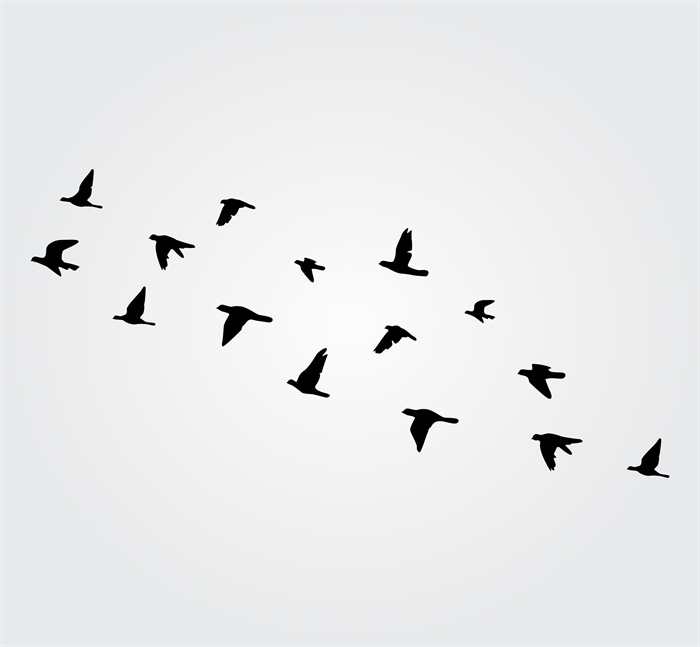 Favorite Flock Of Birds Wall Art With Regard To Flock Of Birds Wall Decal – Elitflat (View 12 of 15)