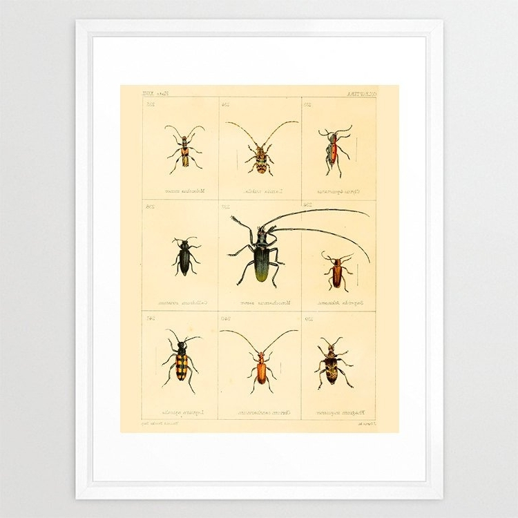 Insect Wall Art For 2018 Insect Poster – Bug Poster – Antique Insect Print – Insect Art (Gallery 1 of 15)