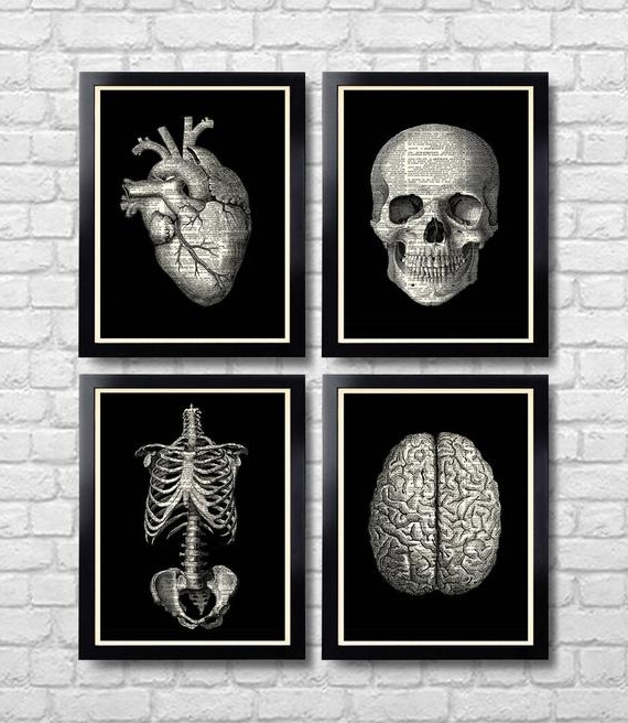 Medical Wall Art for Most Up-to-Date Anatomical Set Anatomy Print Set Of 4 Medical Wall Art