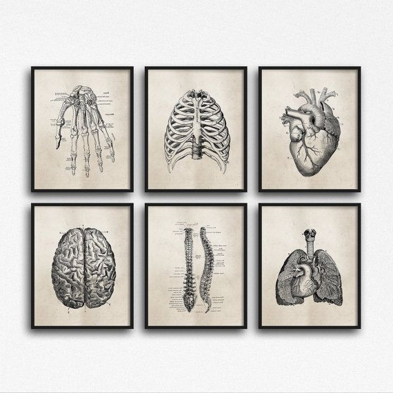 Medical Wall Art Pertaining To Recent Set Of Six Art Prints – Science Anatomy Wall Art, Neutral Tan Brown (View 7 of 15)