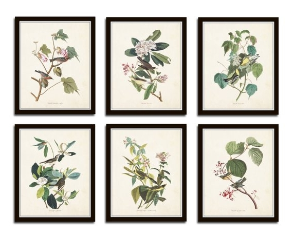 Most Up To Date Botanical Prints Etsy Regarding Audubon Bird Prints Set No (View 14 of 15)