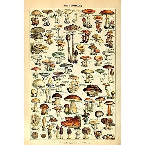 Mushroom Wall Art: Amazon For Newest Mushroom Wall Art (View 10 of 15)