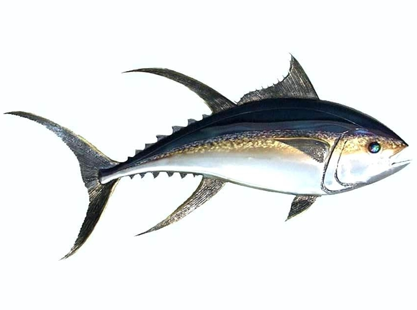 Newest Fish Shoal Metal Wall Art Fish Wall Art Stainless Steel Fish Wall Intended For Stainless Steel Fish Wall Art (View 6 of 15)