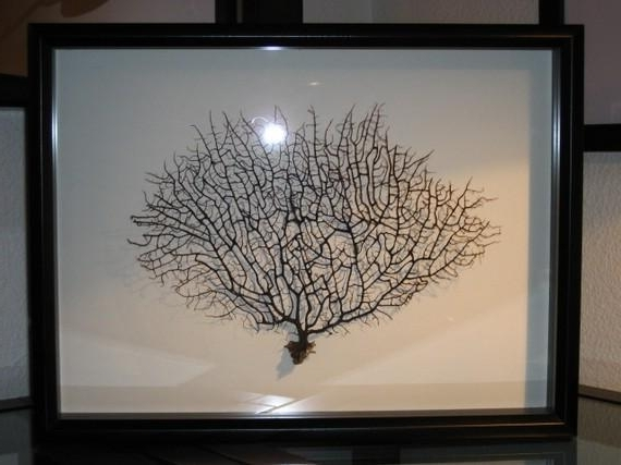 Newest Framed Black Sea Fan Coral Reliquary Throughout Sea Fan Wall Art (Gallery 7 of 15)