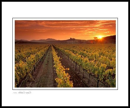 Newest Vineyard Wall Art With California Wine Country Paintings (Gallery 10 of 15)