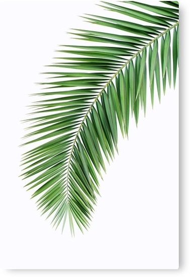Palm Leaf Wall Decor Throughout Trendy Palm Leaf Wall Decor, Printable Leaf Palm, Printable Palm Leaf, Palm (View 7 of 15)