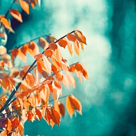 Popular Teal Orange Photography – Turquoise Coral Aqua Nature Print Autumn In Orange And Turquoise Wall Art (View 8 of 15)