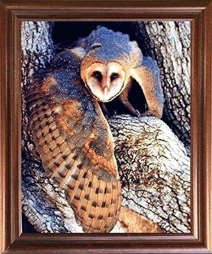 Preferred Owl Framed Wall Art Intended For Owl Framed Wall Art Barn Owl Bird Wildlife Animal Mahogany Framed (View 12 of 15)