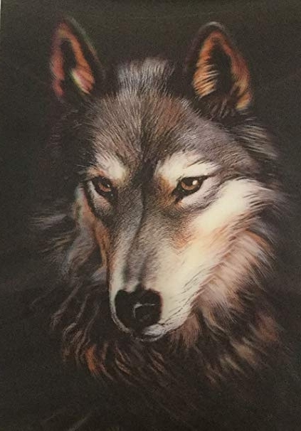 Recent Amazon: 3D Wall Art – Wolf – 3D Lithographic Print – Amazing Inside Wolf 3D Wall Art (View 7 of 15)