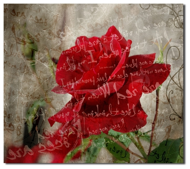 "Red Rose Wall Art With Regard To Most Current Roses Are Red Iii"" Canvas Wall Art – Contemporary – Prints And (View 7 of 15)"