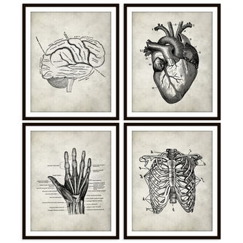Trendy Shop Anatomy Wall Art On Wanelo Intended For Medical Wall Art (View 15 of 15)