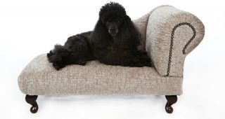 Dog Chaise Lounges