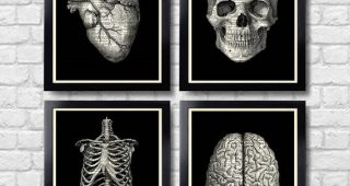 Medical Wall Art